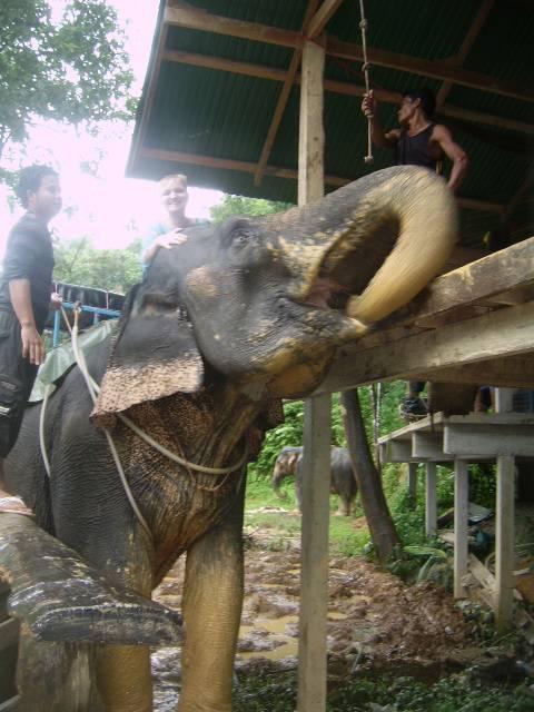 Слон - самый надежный вид транспорта